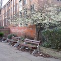 Blossom and benches, St George Street, Leicester