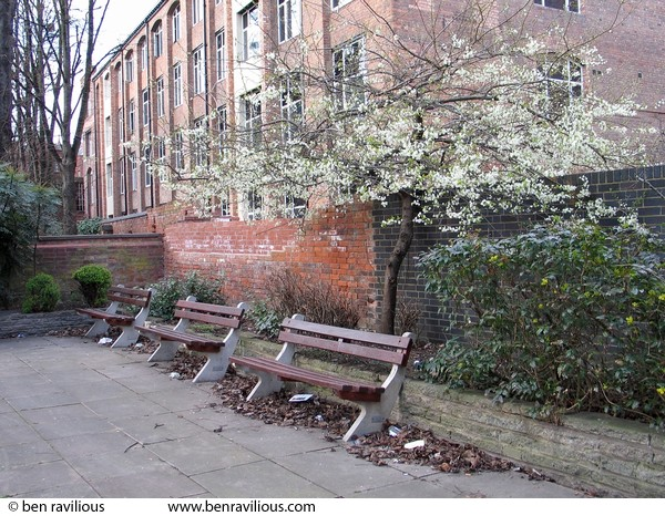 Blossom and benches: St George Street, Leicester, 06 March 2004