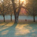 Woman walking across frosty park at dawn , Spinney Hill Park, Leicester, 04 November 2006